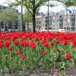 Amsterdam Fiori in Città