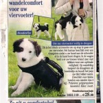 Il Cane Borsetta