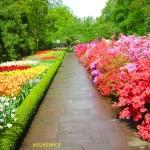 Keukenhof, il più bel Giardino d'Europa